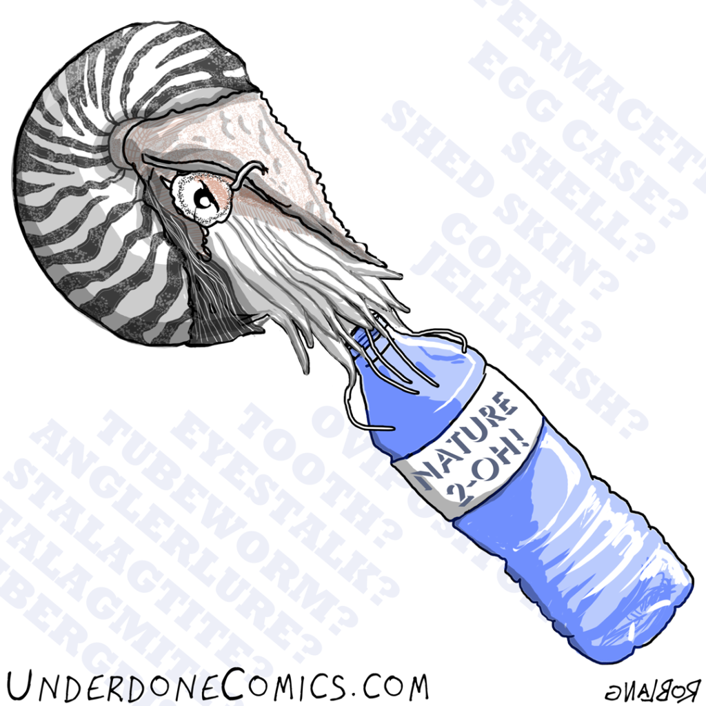 UNDERDONE-DAILY-nautilus-water-bottle